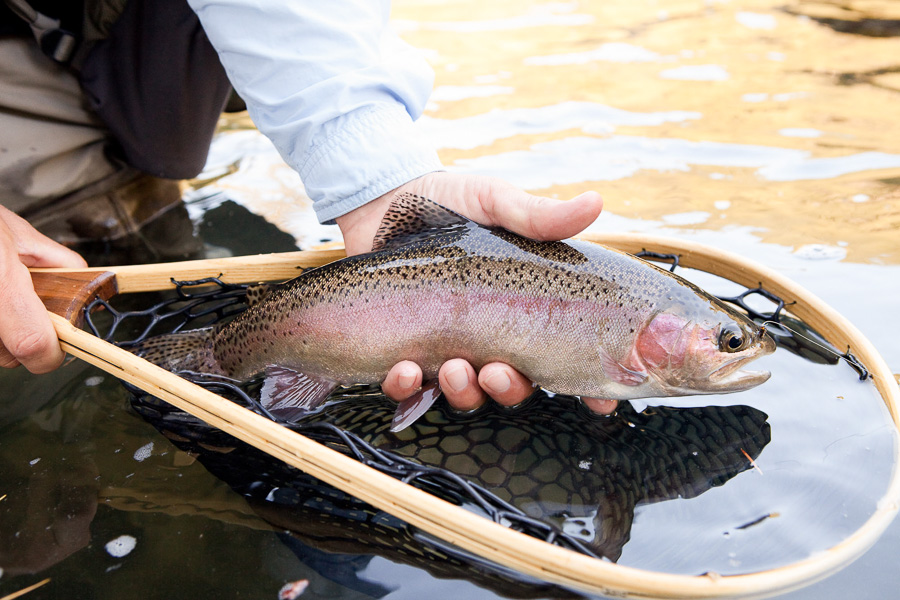 fly_fishing-09